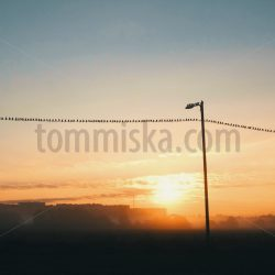 Birds in Haltiala in the morning 1 - Arto Tommiska