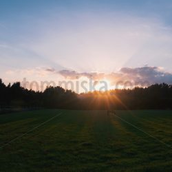 Horse on a field sunset - Arto Tommiska