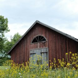 Old barn summer flowers - Arto Tommiska